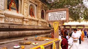 Bihar, Bodhgaya, Mahabodhi Temple, 26 febbraio 2016. Un ramo dell'albero di pipal nato da una talea di quello sotto il quale meditava il Buddha.
