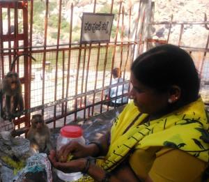 Hampi, pasto con le scimmie al tempio Kodandarama.