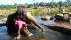 Karnataka, Hampi. Il bagno dell'elefante sacro al Thungabadra River.