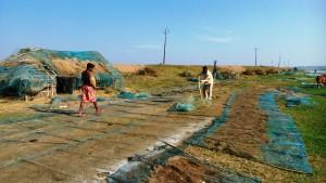 Odissa, Satanarha. Pescatori nella laguna del Chilika Lake.