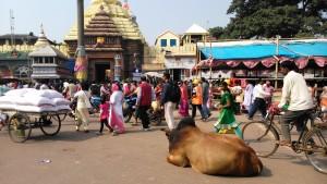Orissa, Puri. Sri Jagannath Temple e Grand Road.