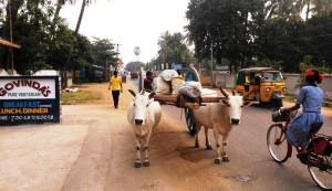 Orissa, Puri. Traffico sulla Chakra Tirtha Rd.