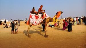 Puri, 17 gennaio 2016. Il giro sul cammello.