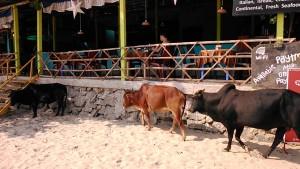 Gokarna, 25 gennaio 2017. L'ora del pranzo alla Kudle Beach.