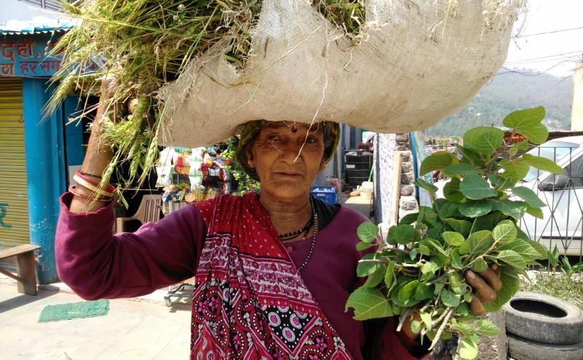 I'm going back to India: Uttarakhand. Almora-Kasar Devi, Kausani, Nainital (April 2017).