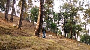 Kasar Devi, 12 aprile 2017. Una pastora sulla collina del tempio.