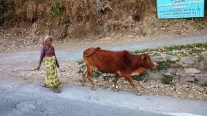 Kasar Devi, 17aprile 2017. Incontro sulla Binsar Road.
